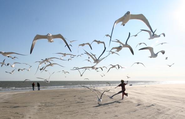 Flock_of_Seagulls_(eschipul)