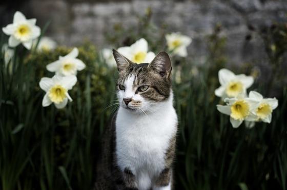 cat-1578539_640