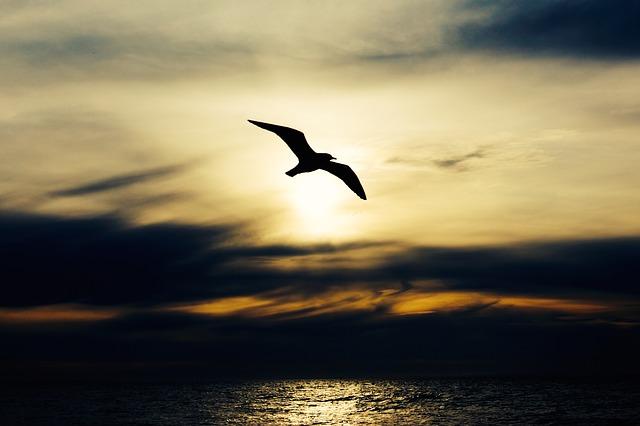 seabird-768584_640